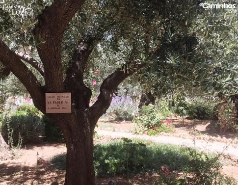 Horto das Oliveiras, Jerusalém, Israel